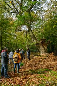 08 FSC Woodland Ecology (c) Marion Sidebottom