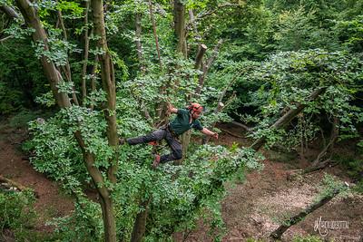 26 Conservation Arborists Pole Hill (c) Marion Sidebottom
