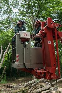 17 Conservation Arborists Pole Hill (c) Marion Sidebottom