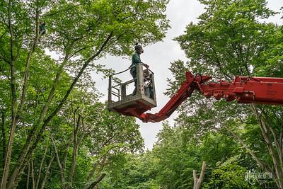 19 Conservation Arborists Pole Hill (c) Marion Sidebottom