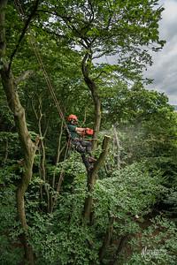 24 Conservation Arborists Pole Hill (c) Marion Sidebottom