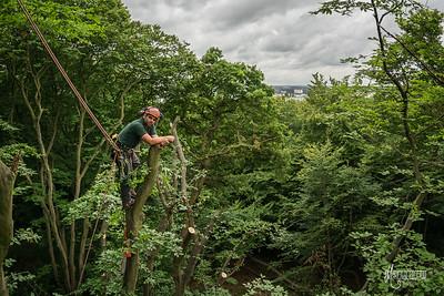 25 Conservation Arborists Pole Hil (c) Marion Sidebottom