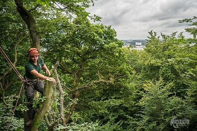 23 Conservation Arborists Pole Hill (c) Marion Sidebottom