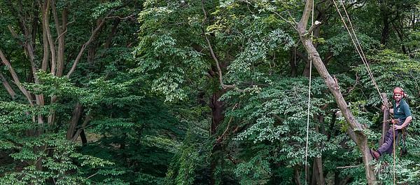27 Conservation Arborists Pole Hill (c) Marion Sidebottom