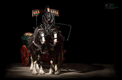 Shire Horses & Brewery Cart