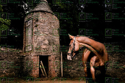 Equine Outdoor Image