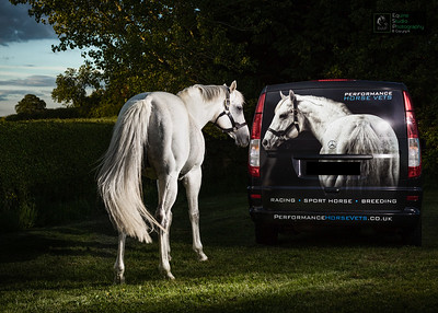Commercial Horse Photography