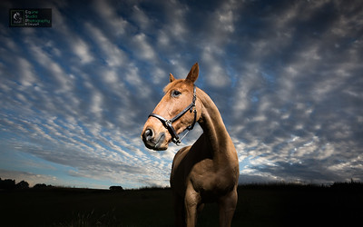 Equine Portrait Outdoors