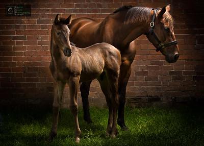 Horse & Foal Portrait