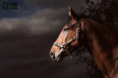 Horse Photographer