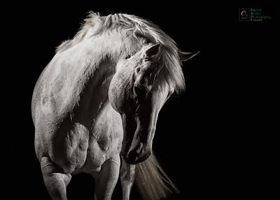 Grey Horse Dynamic Image
