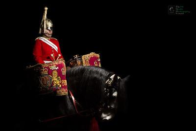 Drum Shire Horse