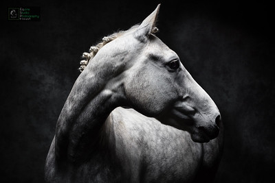 Grey Horse Studio Lighting