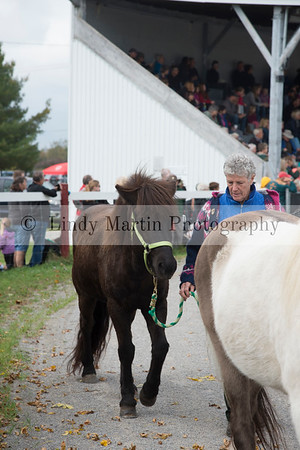 equine photography by Lindy Martin