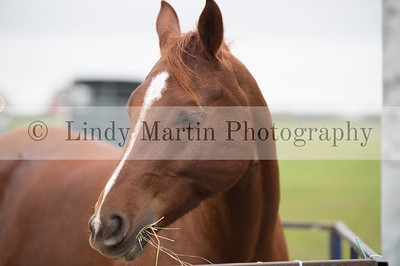 horse photography by Lindy Martin