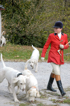 Huntsman with her foxhounds as they prepare for the annual blessing of the fox hunting hounds, horses, and riders at the Iroquios Hunt Club in Lexington, Kentucky USA. The event marks the beginning of the hunting season.