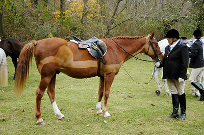 Fox hunter with her well groomed horse at the blessing of the fox hunting hounds, horses, and riders at the Iroquios Hunt Club in Lexington, Kentucky USA. The event marks the beginning of the hunting season.