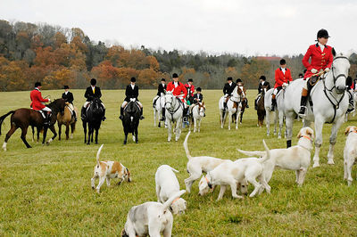 Huntman,foxhounds, and riders  in the Bluegrass region of Kentucky, USA for  the first hunt of the season following the Blessing of the Hounds event at the Iroquois Hunt Club.