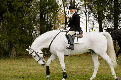 Mounted rider on beautiful white horse on the way to the first fox hunt of the season.  Iroquois  Hunt Club, Lexington, Kentucky, USA