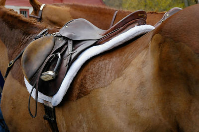 English saddle on horse at the Blessing of the Hounds event  at the Iroquois Hunt Club in Lexington, Kentucky USA.