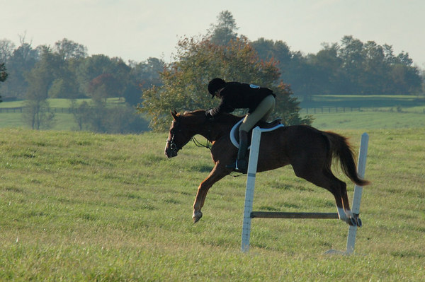 Stock image of the Masters of Foxhounds Association Centennial Field Hunter Competition.  This was the Midsouth and Central District championship hosted by the Iroquois Hunt Club at Boone Valley Farm in Lexington, Kentucky in October 2006.