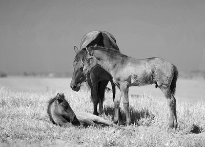 foals infra 2214