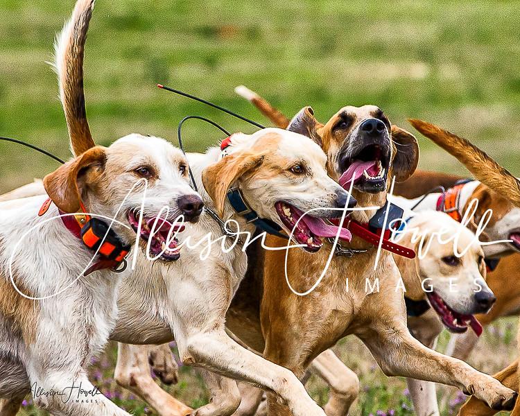 Happy hounds2017