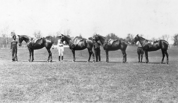 """Title: Fayette County, Kentucky. Iroquois Hunt Club. Perfect polo pony types: left to right - """"Castlebar"""", """"Athenry"""", """"Donegal"""", and """"Clare"""". Date: 1900-1954 Collection: C. Frank Dunn Photographs Collection, 1900-1954, bulk 1920-1940"""