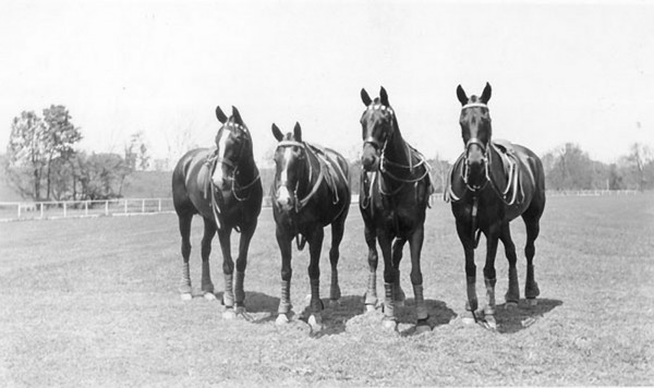 Title: Fayette County, Kentucky. Iroquois Hunt Club left to right: Mr. Lebus's, Jamaica, Mr. S. Harbison's, Static, Mr. Simpson's, Ballintrae, General Carter's, Leilehua. Date: 1900-1954 Collection: C. Frank Dunn Photographs Collection, 1900-1954, bulk 1920-1940