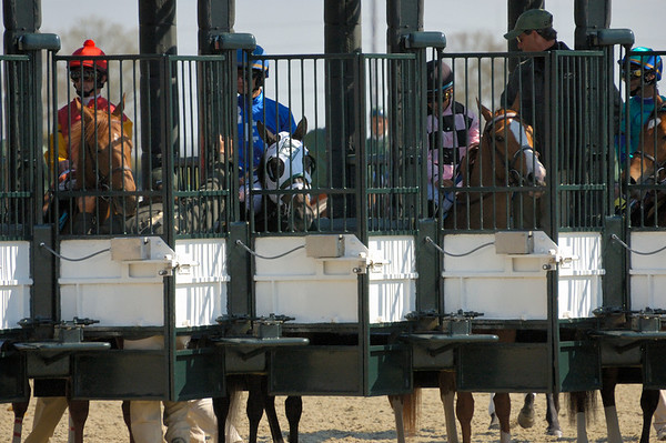 Stock image of the starting gate with thoroughbred horses ready to race at the spring meet at the Keeneland track in Lexington Kentucky USA