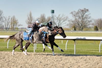 Stock image of two thoroughbred horses and exercise jockeys racing together during an early morning workout at the Keeneland track in Lexington Kentucky USA