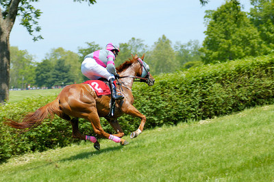 Stock image of horse and rider steeplechase competitors at the High Hope Steeplechase held annually at the Kentucky Horse Park in Lexington, Kentucky, USA.