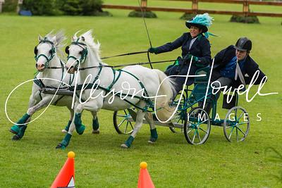 Driving grey ponies 2015