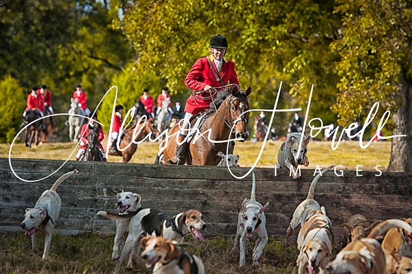 Following the Hounds