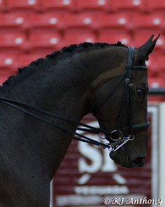 Dressage At The National Celebration of the Pure Spanish Horse on August 30, 201. USEF Competition # 325886