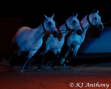 The 2011 P.R.E. National Celebration of the Pure Spanish Horse Championship Horse Show concluded on Saturday, September 3, 2011 with a special evening... The Horse of the Kings Theater.  The evening allowed the history of the Pure Spanish horse to be revealed, as never before.