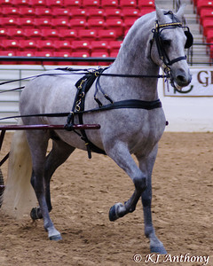 During The PRE National Celebration of the Pure Spanish Horse Show, there demonstrations of horsemanship including.  The driving demo allowed people to come down and drive a horse, it was a great demonstration.  Thank you to these presenters and their horses.