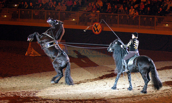 Clay Maier and his Friesians