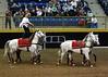 Roman Riding 4140 al sh300