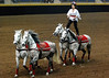 Roman Riding 4146 al sh300