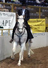 Karen Oberlohr on her Andalusian (PSP) gelding, Jalapeno
