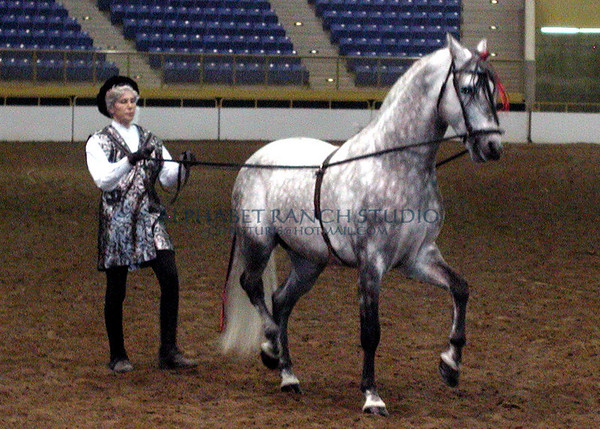 Frances Carbonnel and her PRE stallion,  Fino