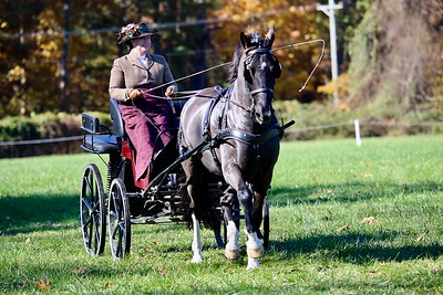 Carriage Driving for Sport or Pleasure