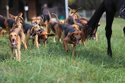 Andrews Bridge Hounds photos shoot September 2017 Fair Hill