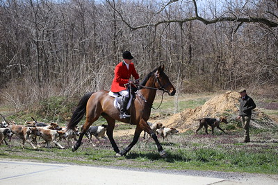 Foxchasing and Hounds