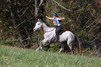 Equestrian Photography  click to view all folders