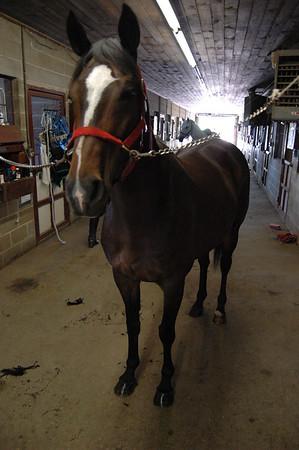 Our Farm Horse Show - 6/24/07