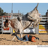 rodeo2009_17964