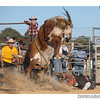 rodeo2009_17997