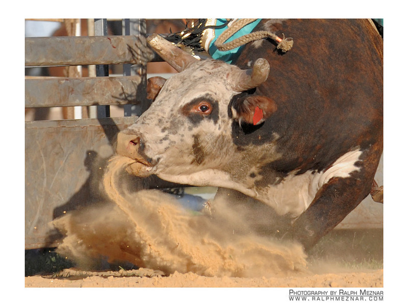 rodeo2009_18093